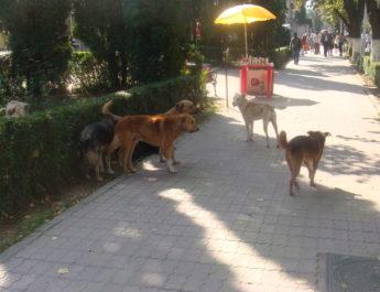 Cum va acţiona serviciul de capturare a câinilor fără stăpân şi cât ne va costa