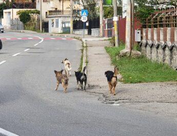 """""""Câini sunt peste tot!"""""""